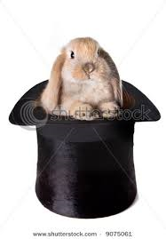 bunny in a hat