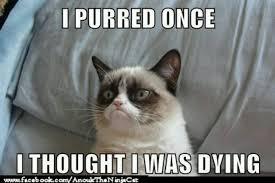 hypo cat