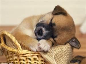 DOG SLEEPING 2