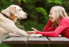 person talking to dog 3