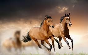 Wild horse 1