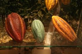 Chocolate beans 3