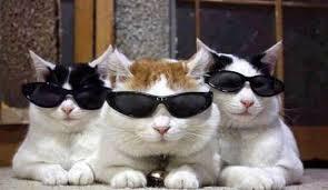 Cat Spy 2