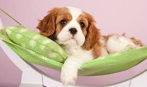 pampered dog 3