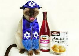Passover Dog 1
