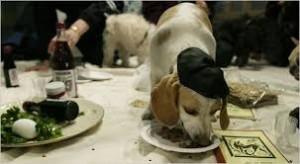 Passover Dog 2