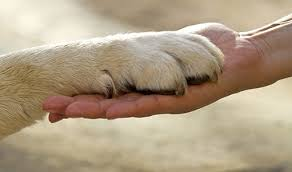 Dog Loyality 2