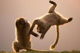 monkeying around 1