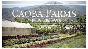 Caoba Farms Restaurant 2
